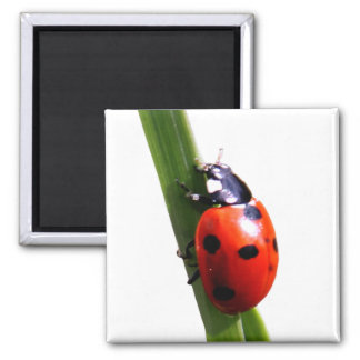 Cute Red Spotted Ladybug Magnet