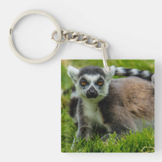 Cute ring tail lemur design products Double-Sided square acrylic key ring