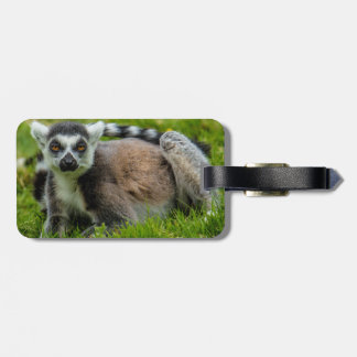 Cute ring tail lemur design products luggage tag
