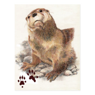 Cute River Otter, Animal and Tracks, Natue Postcard