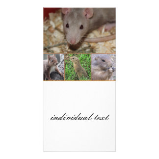cute rodents personalized photo card