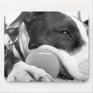 cute sad looking pitbull dog black white with ball mouse pad