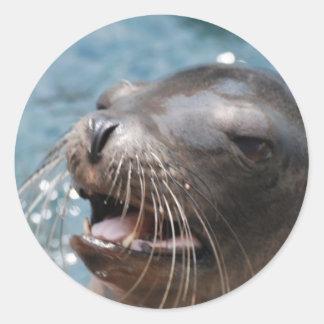 Cute Sea Lion  Stickers