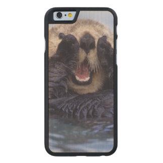 Cute Sea Otter | Alaska, USA Carved Maple iPhone 6 Case