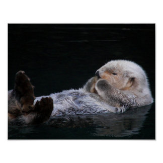 Cute Sea Otter Poster