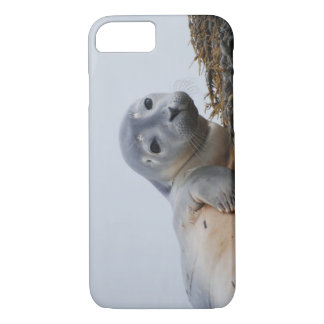 Cute Seal Pup iPhone 7 Case