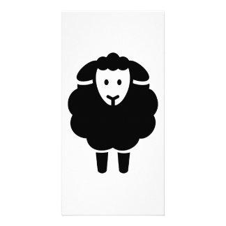Cute sheep picture card