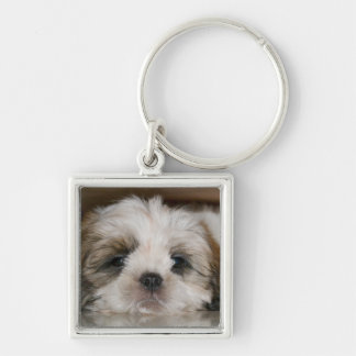 Cute Shih Tzu Dog Silver-Colored Square Key Ring