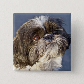 Cute Shih Tzu Puppy Pin