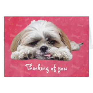 Cute Shih Tzu Puppy: Thinking of You Card