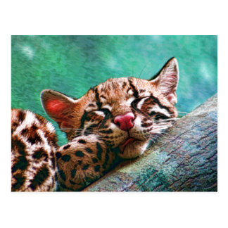 Cute Sleeping Baby Ocelot Kitten Postcard