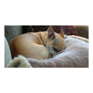 Cute Sleeping Chihuahua Puppy Photo Cards