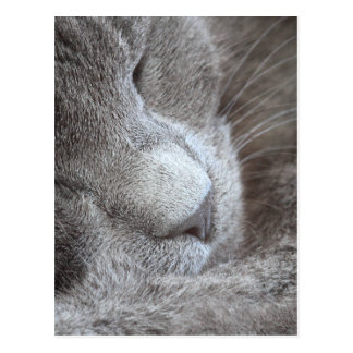 Cute Sleeping Kitten Postcard
