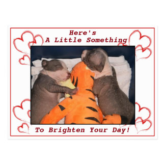 Cute Sleeping Pit Bull Puppy Card Postcard