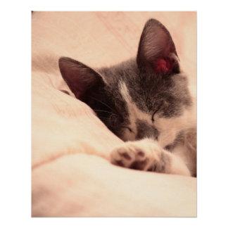 Cute Sleepy Cat Kitten Pet Peace Love Destiny