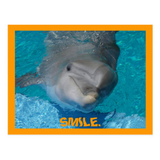Cute smiling dolphin postcards