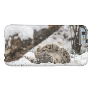 Cute Snow Leopard Plays in Snow Barely There iPhone 6 Case