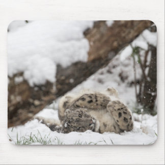 Cute Snow Leopard Plays in Snow Mouse Pad