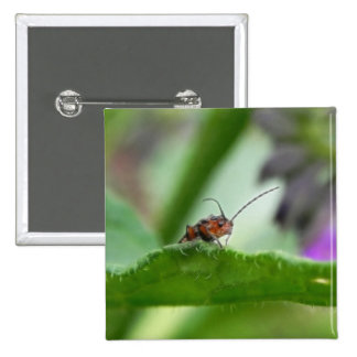 Cute Soldier Beetle Pinback Buttons