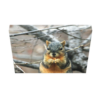 Cute squirrel and his nut stretched canvas print