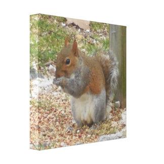 Cute Squirrel Canvas Art
