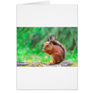 Cute squirrel card