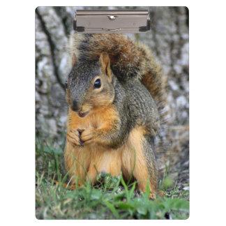 Cute Squirrel Clipboard