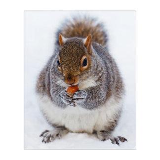 Cute squirrel eating a nut in snow acrylic wall art