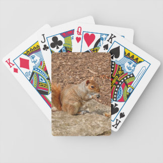 Cute Squirrel eating nuts Bicycle Playing Cards