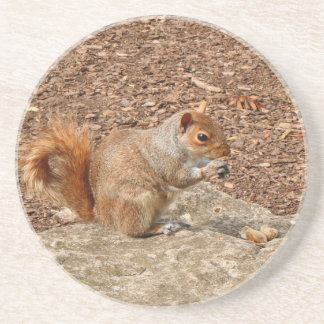 Cute Squirrel eating nuts Coaster