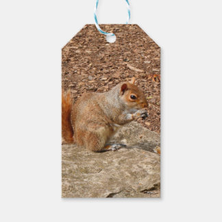 Cute Squirrel eating nuts Gift Tags