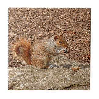 Cute Squirrel eating nuts Tile