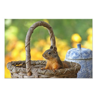 Cute Squirrel in a Basket Photo