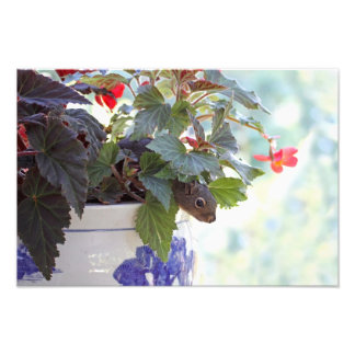 Cute Squirrel in a Flower Pot Art Photo