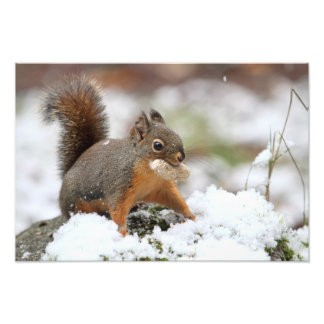 Cute Squirrel in Snow with Peanut Art Photo