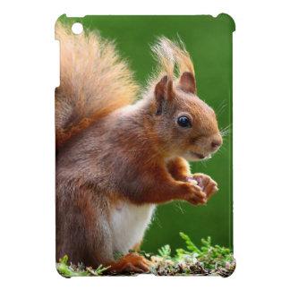 Cute squirrel in the Garden Cover For The iPad Mini
