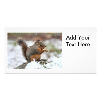 Cute Squirrel in the Snow Photo Personalized Photo Card