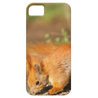Cute Squirrel  iPhone 5 5S Cover For iPhone 5/5S