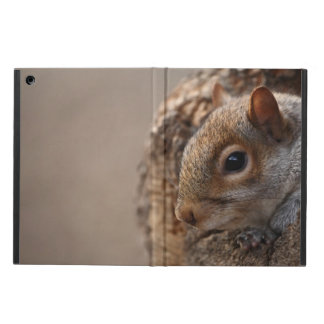 Cute squirrel looks out of her hole cover for iPad air