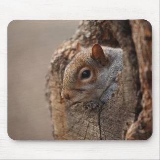 Cute squirrel looks out of her hole mouse pad