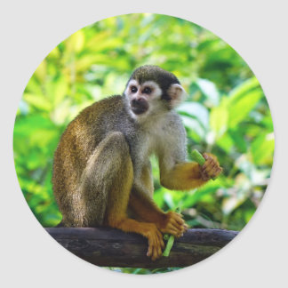 Cute squirrel monkey classic round sticker