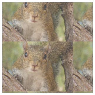 Cute squirrel pattern on material. fabric