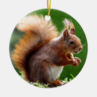 Cute Squirrel Picture Christmas Tree Ornaments