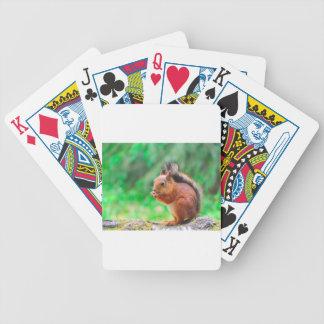 Cute squirrel poker deck