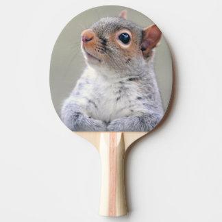 Cute squirrel portrait