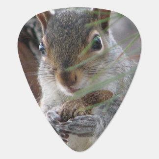 Cute Squirrel With Peanut Woodland Musician Fun Guitar Pick