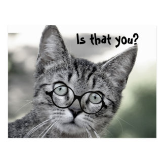 Cute Surprised Cat with Glasses Post Card