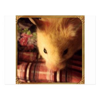 Cute Syrian Hamster Postcard