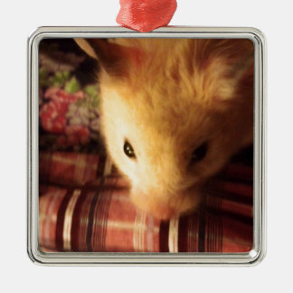 Cute Syrian Hamster Silver-Colored Square Decoration