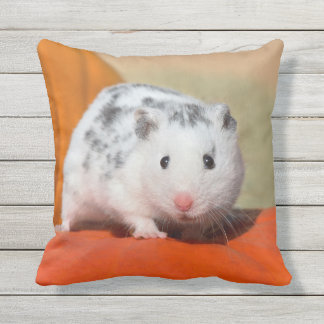 Cute Syrian Hamster White Black Spots Funny Pet on Outdoor Cushion